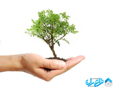 tree_in_hand