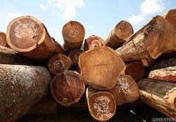 محافظت از پی عمیق چوبی