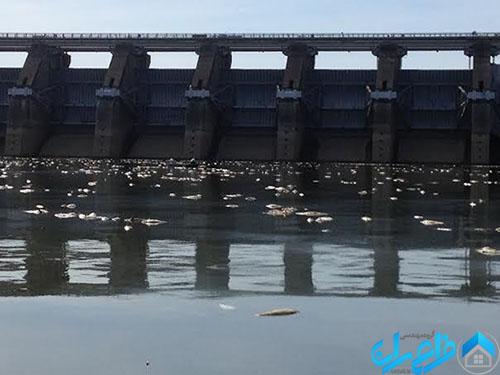 مرگ و میر ماهی ها از اثرات زیست محیطی سد ها